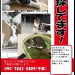 宮代町東姫宮の猫ちゃんを探しています‼︎